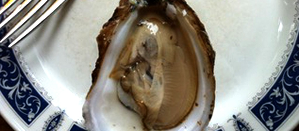 East Coast vs. West Coast Oyster Tasting